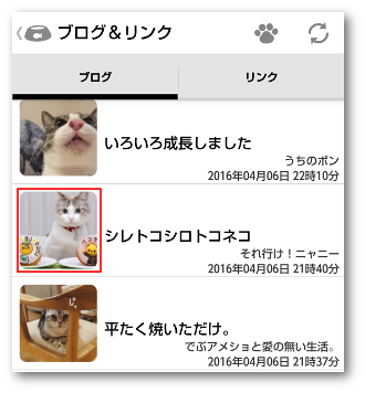 猫まとめ06